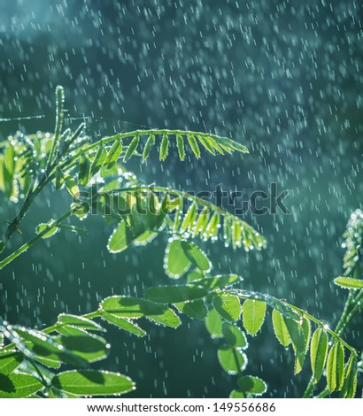 Lush green leaves with falling drops - stock photo