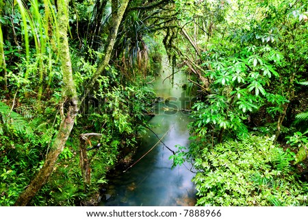 Lush, green native rainforest scene - stock photo