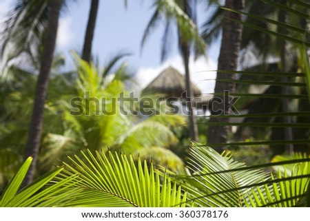 Lush green palm leafs in Jaco, Costa Rica