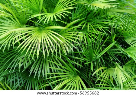 Lush green palm leaves in tropical forest - stock photo