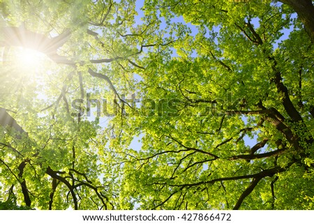Lush green spring branches of oak tree with sunlight. Nature background. - stock photo
