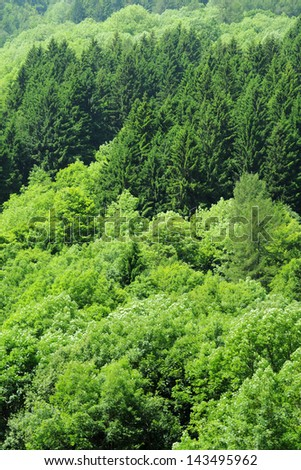 Lush green trees on a hill covered by forest