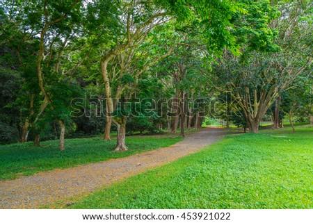 Lush green tropical rain forest in Hawaii on the island paradise of Oahu near Honolulu - stock photo