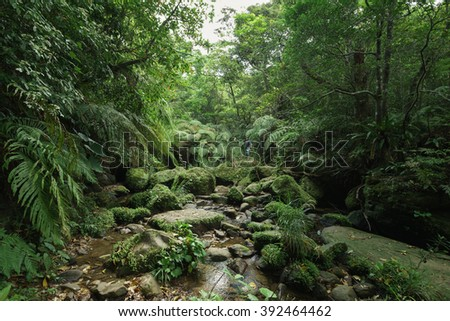 Lush green tropical Rainforest in Iriomote island, Okinawa, Japan - stock photo