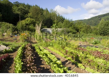 Lush green vegetable plot with poly tunnel and forests. - stock photo
