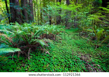 lush greenery in forest