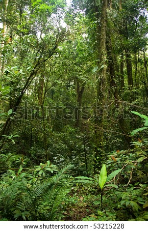 lush jungle fauna - stock photo