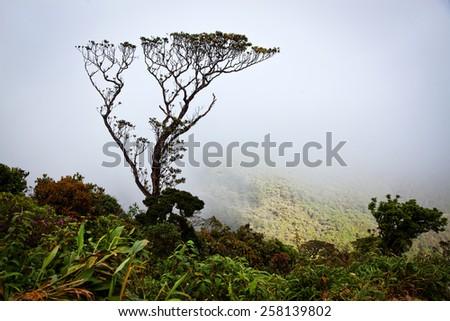 Lush jungle vegetation in mist - stock photo
