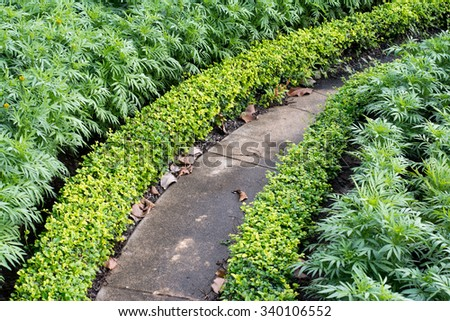 Lush landscaped garden - stock photo