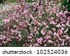 lush magnolia tree - stock photo