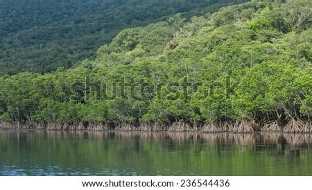 Lush mangrove forest along river, Iriomote Island National Park of the Yaeyama Islands, Okinawa, Japan - stock photo