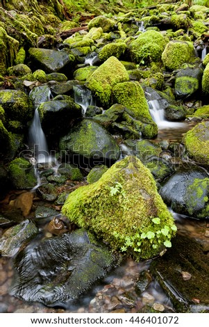 Lush moss covered rocks and a stream near Sol Duc Falls in Washington. - stock photo
