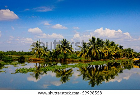 Lush palm trees reflection in Kerala