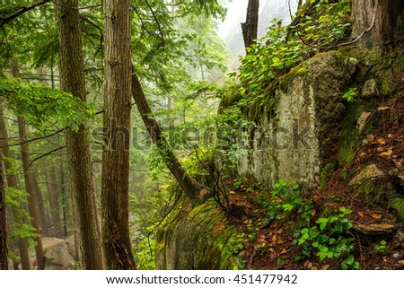 Lush rainforest in Stawamus Chief Provincial Park, Squamish, British Columbia, Canada. - stock photo