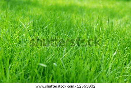 Lush sunlit green spring grass background with shallow focus