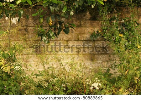 Lush Vegetated and Worn Country Wall