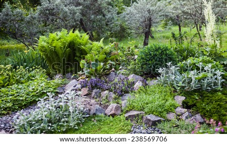 Lush vegetation in the green rock garden. - stock photo