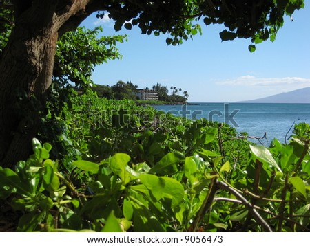 Lush Vegetation on Maui