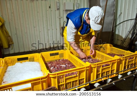 Lutsk, Ukraine, August 5, 2009: processing factory chicken, August 5, 2009, Lutsk