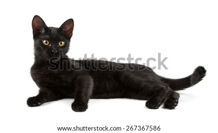 lying black cat with yellow eyes - stock photo