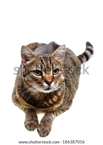 Lying cat on the white background - stock photo