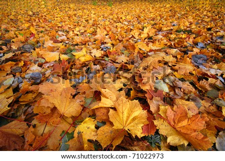 lying leaves frosted up in the frosty autumn morning - stock photo