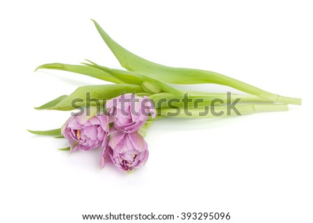 Lying pink tulips. View from above. Isolated on white background - stock photo