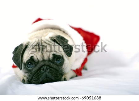 Lying Puppy with Santa Claus dress - stock photo