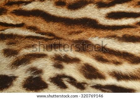 lynx fur background - stock photo