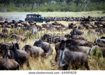 Maasai Mara Animal Migration - stock photo
