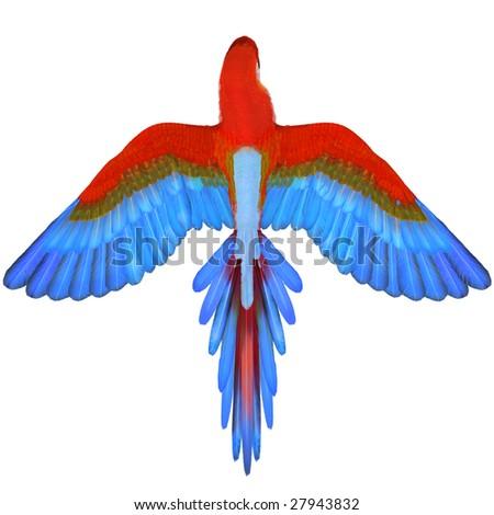 Macaw - stock photo