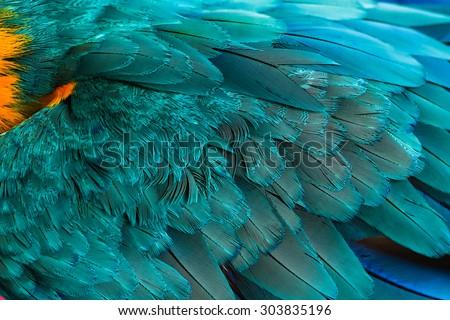 Macaw bird feathers - stock photo