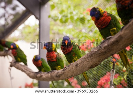 Macaw bird sitting on the perch. Beautiful colorful parrots sitting on log in exotic garden. Zoo. - stock photo