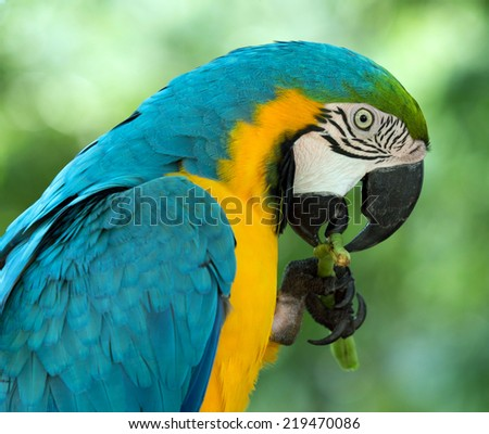 macaw bird sitting on the tree - stock photo