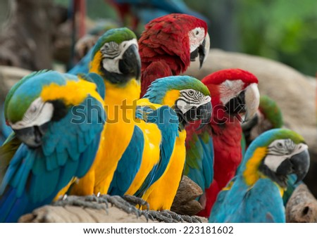 macaw bird sitting on the tree - stock photo