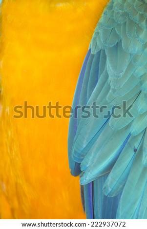 Macaw feathers background - stock photo