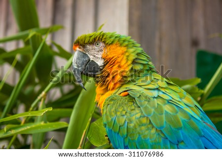 Macaw Green 2 - stock photo