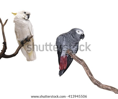 Macaw parrot branch isolated  on white background.