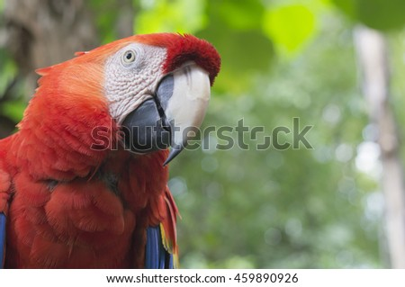 macaw parrot red tree jungle exotic