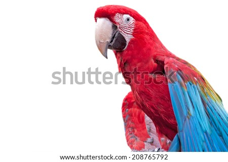 Macaw parrot with colorful feathers - isolated on white background