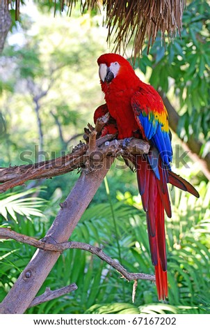 Macaw perched in a tree