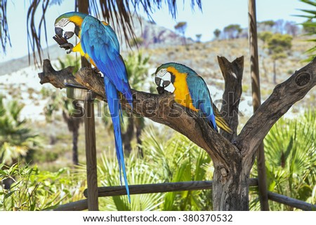 macaw sitting on branch in the tropic forest - stock photo
