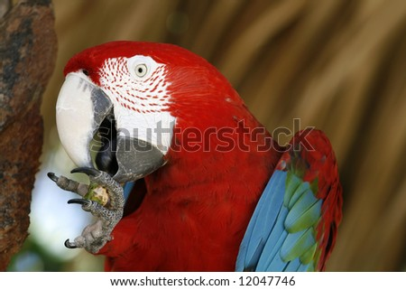 Macaw up close