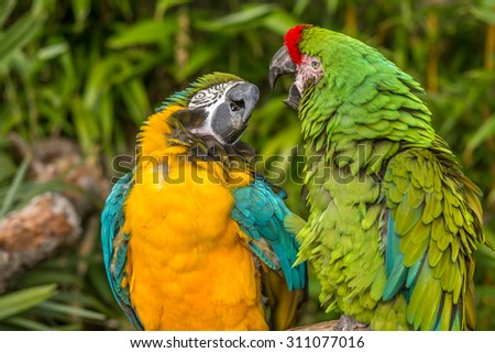 Macaws 2 - stock photo