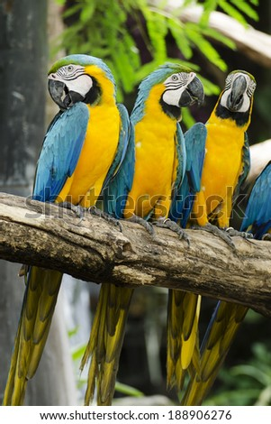 Macaws./Macaws on the tree. - stock photo