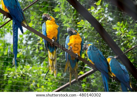 macaws sitting on a branch in zoo