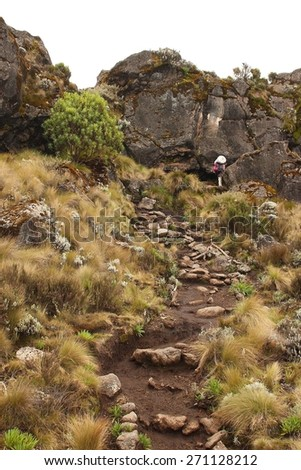 Machame route to Kilimanjaro summit. Stage 2 from Machame Hut to Shira Hut. Near Shira Cave. - stock photo