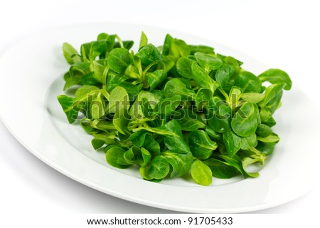 mache ,Valerianella locusta,corn salad,lamb's lettuce - stock photo