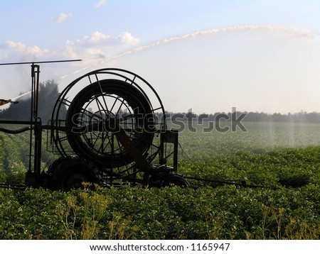 machine watering potatoe field, western Jutland, Denmark.