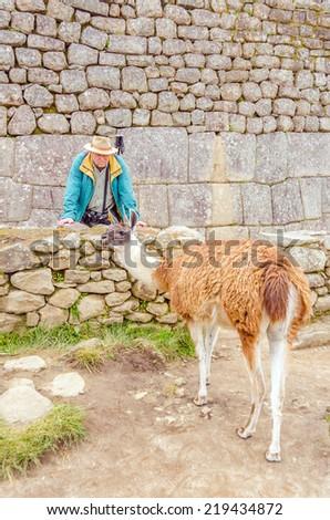Machu Picchu, Peru - senior tourist and llama in ruins - stock photo